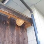 宇部市便利屋ジーケーサービス 宇部市船木 一軒家の軒下 スズメバチ巣駆除