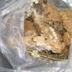 宇部市船木 工場敷地内の法面 オオスズメバチ巣駆除