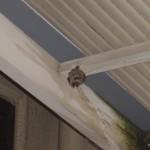 宇部市便利屋ジーケーサービス アシナガバチの巣駆除