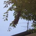 宇部市便利屋ジーケーサービス スズメバチの巣駆除