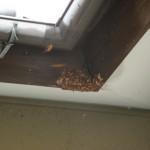 宇部市便利屋ジーケーサービス 川上 スズメバチの巣駆除